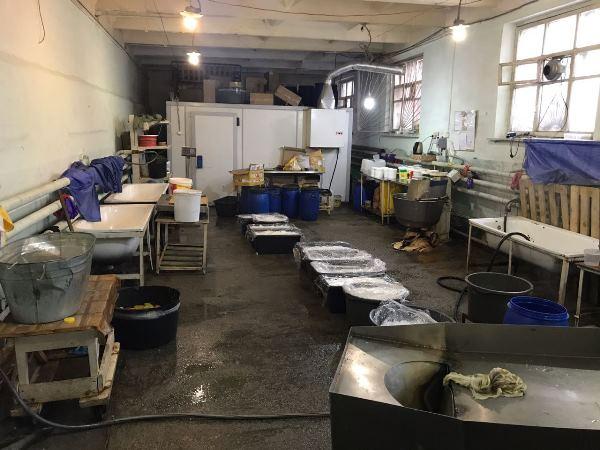 ВЕкатеринбурге ликвидирован подпольный цех поизготовлению салатов