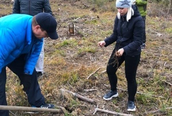 Под Североуральском высадили 300 саженцев редких деревьев